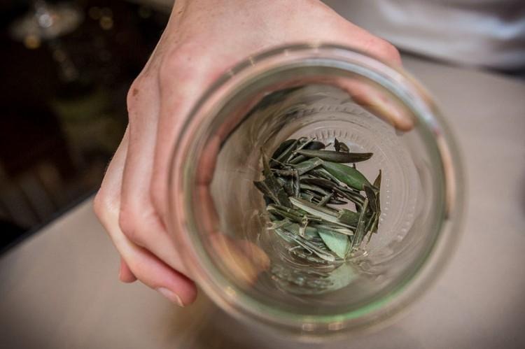 rbb-lauf-vorbereitung-tobi-tag-4-4-olivenblaettertee